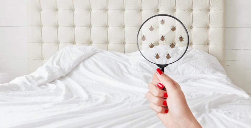 Bettdecke und Kissen sollten turnusmäßig gereinigt werden - Daunendecke waschen und trocknen