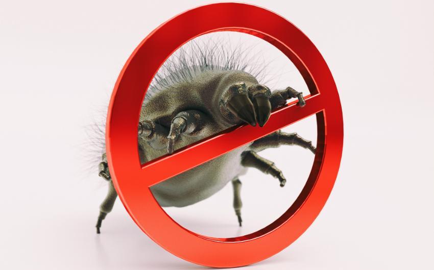Bekämpfung der Milben mit Kälte