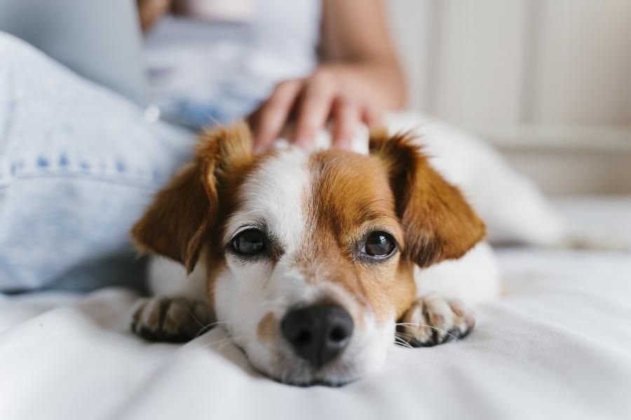 Haustiere reflektieren nicht und besitzen kein direktes Bewusstsein fuer den eigenen Koerper