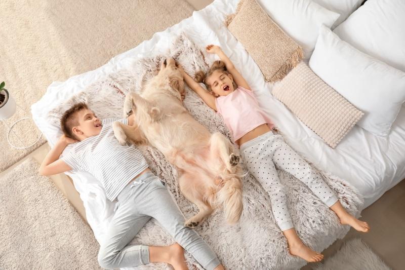 Ein kleiner Junge, ein kleines Mädchen und ein Hund liegen in einem Bett Schlafzimmertemperatur und Luftfeuchte