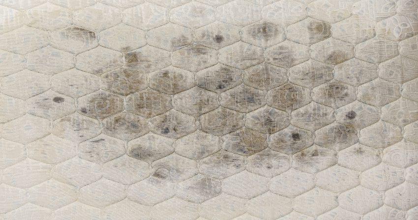Schimmelflecken auf Matratze