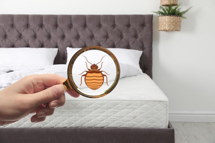 Milbe im Bett, Symbolbild - Matratzenhygiene ist wichtig