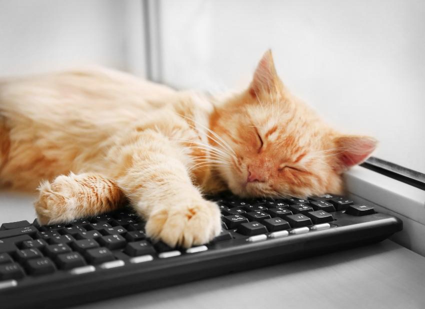 Rote Katze schläft auf einer Tastatur