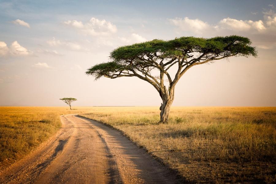 Afrikanische Landschaft in Tansania mit einem Akazienbaum