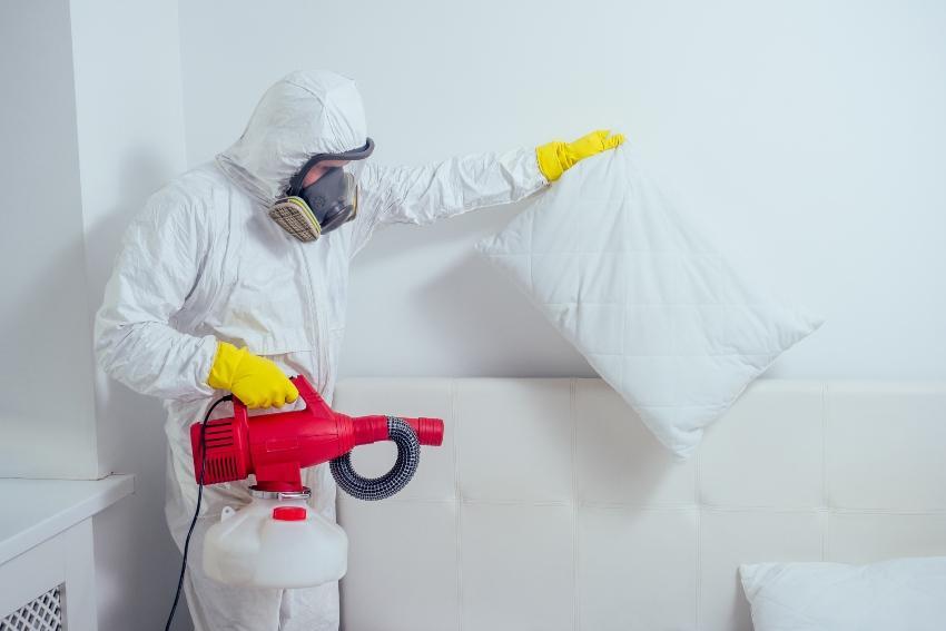 Schädlingsbekämpfer versprüht Chemikalie im Schlafzimmer - Bettwanzen bekämpfen