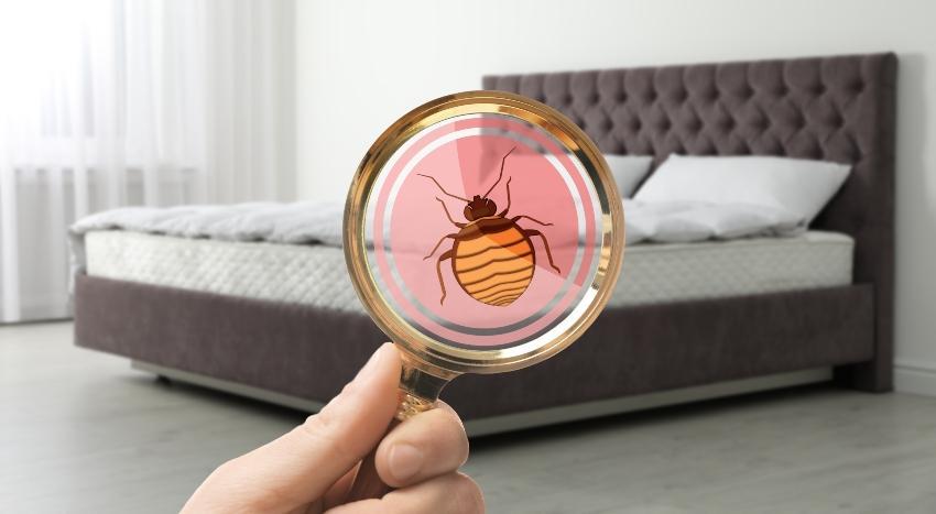 Symbolbild, Lupe entdeckt Ungeziefer im Bett