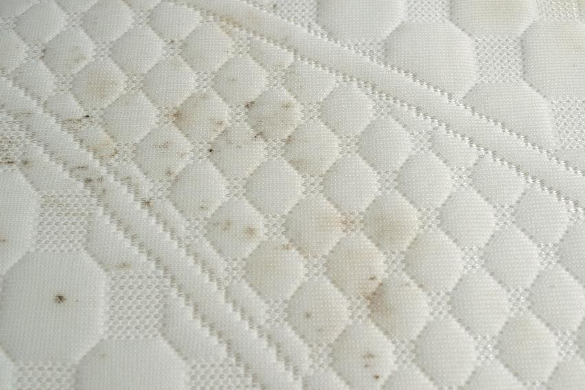 Schimmel oder Stockflecken nehmen Einfluss auf die Haltbarkeit der Matratze